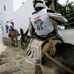 Red-Bull-Donkey-Cross_1
