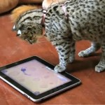 cat-ipad-game