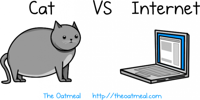 cat vs internet header