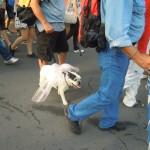 Athens Pride 2011 064