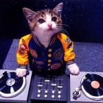 Αυτά τα γατάκια είναι σίγουρα καλύτεροι DJs από σένα