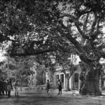 Κηφισιά, 1920