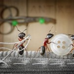 ant-photography-11