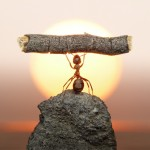 ant-photography-2