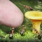 ant-photography-3