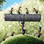 ant-photography-9