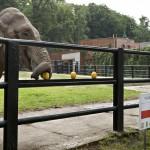 elephant-euro-2012