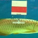 fish-euro-2012