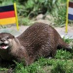 "Otter ""Ferret"" votes for Germany as it p"