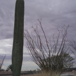 cell-phone-tower-disguised-as-a-cactus-2