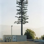 cell-phone-tower-disguised-as-a-tree-10