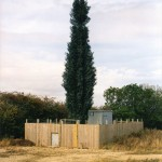 cell-phone-tower-disguised-as-a-tree-2