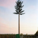 cell-phone-tower-disguised-as-a-tree-3