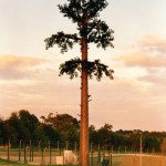 cell-phone-tower-disguised-as-a-tree-6