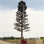 cell-phone-tower-disguised-as-a-tree-8