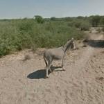 google-donkey-12