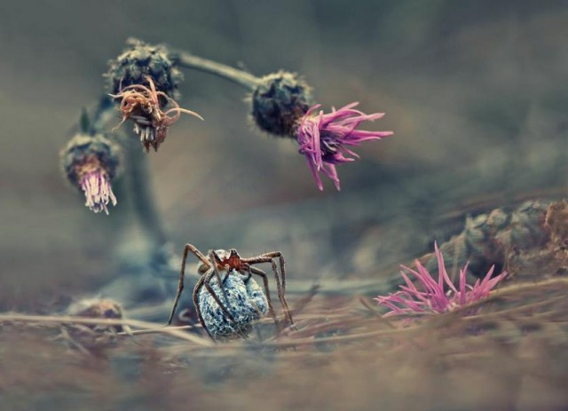 Krasimir Matarov, Bulgaria, Winner, Nature & Wildlife, Open Competition 2013 (2)