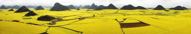 Canola Flower Fields, China2