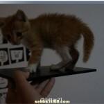 Sony Xperia ZU leaked