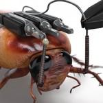 cockroach-kinect (1)