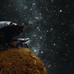 bug_stargazing