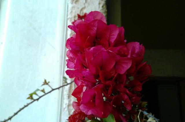 Lumia-1520-camera-21