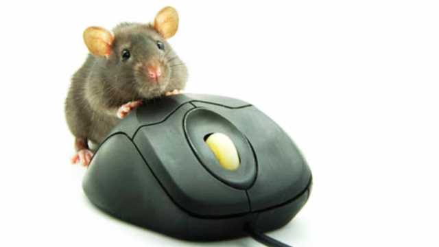 stupid-mouse