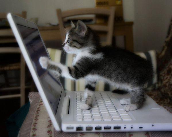 Cat_PC