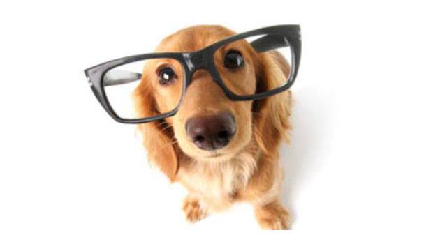 smart-dog
