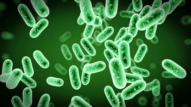 Βακτήρια