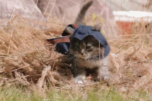 Assassin's Creed Kittens