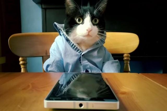 catz-using-lumia-930-970x0