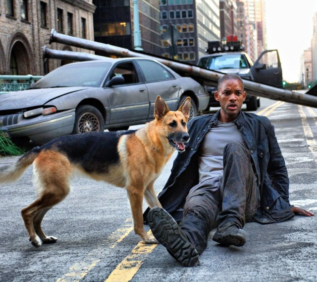 movies_dogs_people_actors_will_smith_i_am_legend_4000x2657_wallpaper_Wallpaper_1080x960_www.wallpaperswa.com