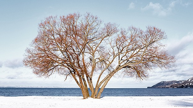 δέντρο