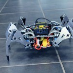 Erle-Spider