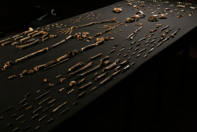 homo-naledi-bone-table