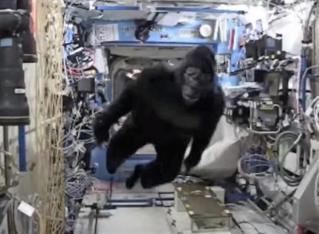 160223-gorilla-2-630x462