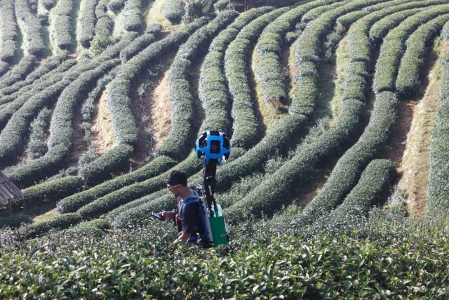 2000_Tea_Plantation_in_Ang_Khang_Royal_project