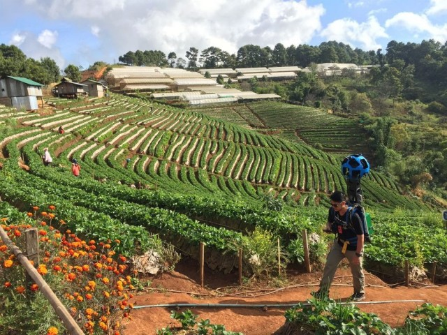 Strawberry_field_in_Ang_Khang_Royal_project