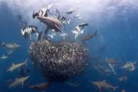 """""""Η σειρά των πραγμάτων"""". Φωτογραφία: Allen Walker, Νότια Αφρική. Κατηγορία: Wide Angle - Marine Life (Bronze Medal Winner). Τοποθεσία: Νότια Αφρική."""