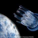1st-wa-ocean-art-2015-francesco-visintin-1500