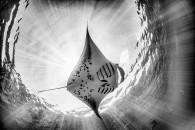 """""""Υποβρύχια πτήση στην ακτή της Hanifaru"""". Φωτογραφία: Marco Gargiulo, Ιταλία. Κατηγορία: Wide Angle - Natural Light (Gold Medal Winner). Τοποθεσία: Μαλβίδες."""