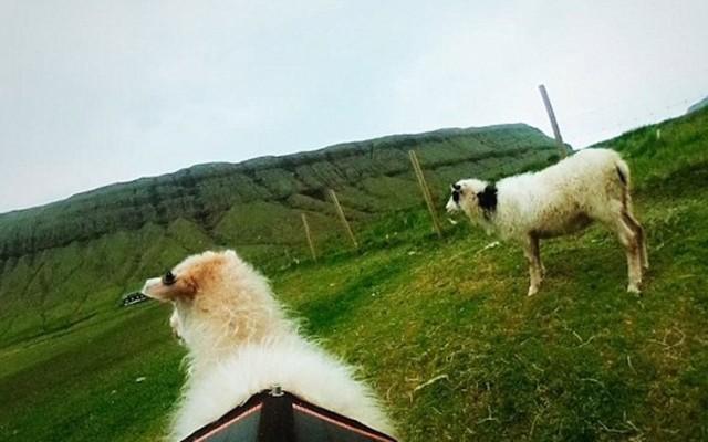 Faroe7