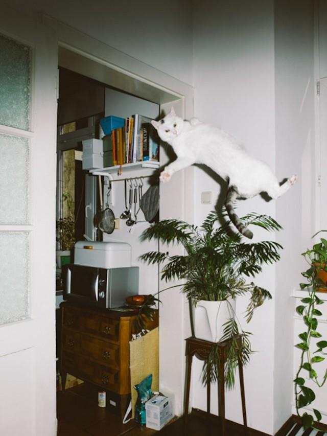 01_catcal_gebhart_de_koekkoek