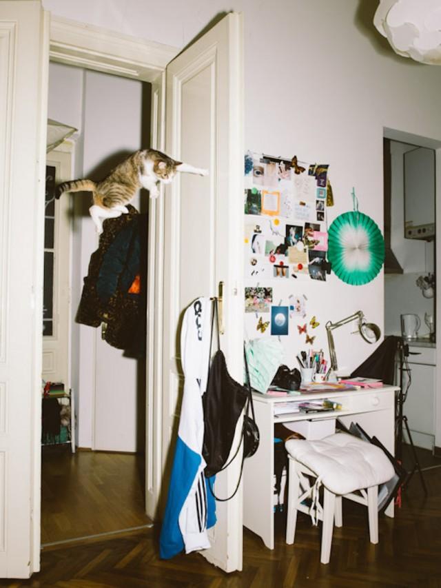 08_catcal_gebhart_de_koekkoek