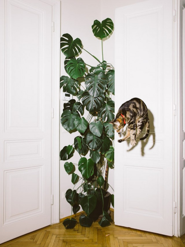 10_catcal_gebhart_de_koekkoek