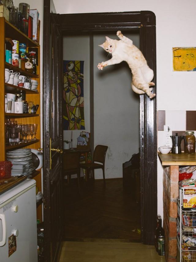 13_catcal_gebhart_de_koekkoek