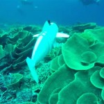 mit-robotic-sofi-fish-3d-printed-parts-future-underwater-observation-2