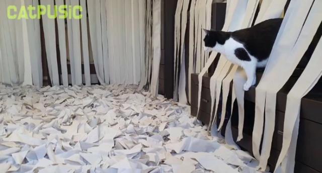 cat-toilet-paper