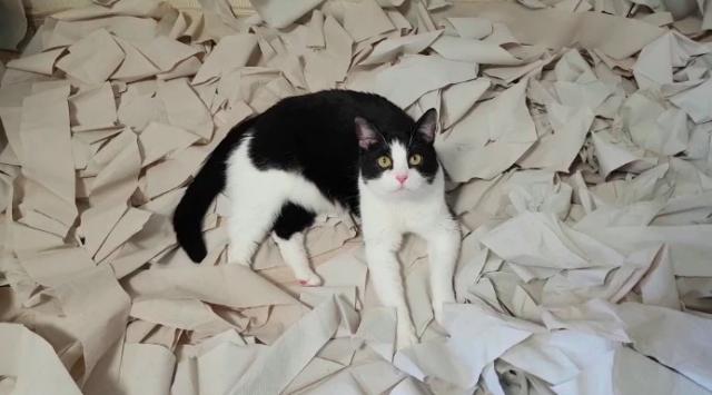 cat-toilet-paper2